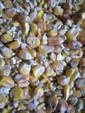 Kukuřice 20kg
