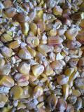 Kukuřice 40kg